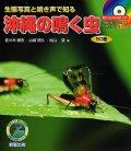 沖縄の鳴く虫